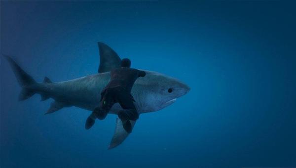 Встреча с акулой-убийцей за пределами игровой карты
